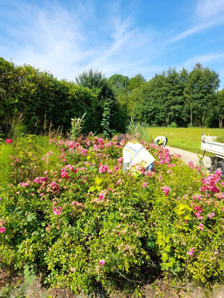 Lire la suite de l'actualité Nettoyage des espaces fleuris par les jeunes employés saisonniers